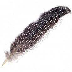 feather_guinea